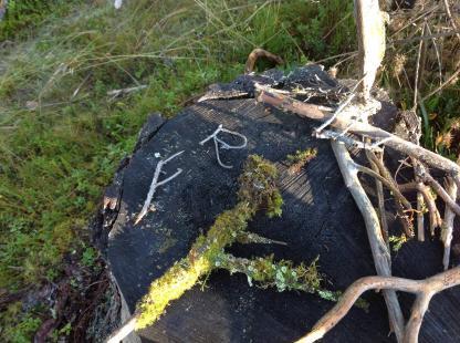 På våra skogsturer hittar barnen också bokstäver!